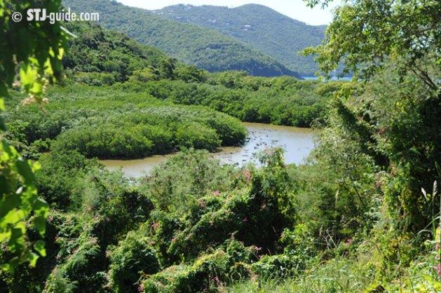 francis-bay-trail-stjohn-usvi