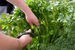 herb_garden_2913
