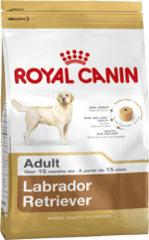 labrador-retriever-adult_large