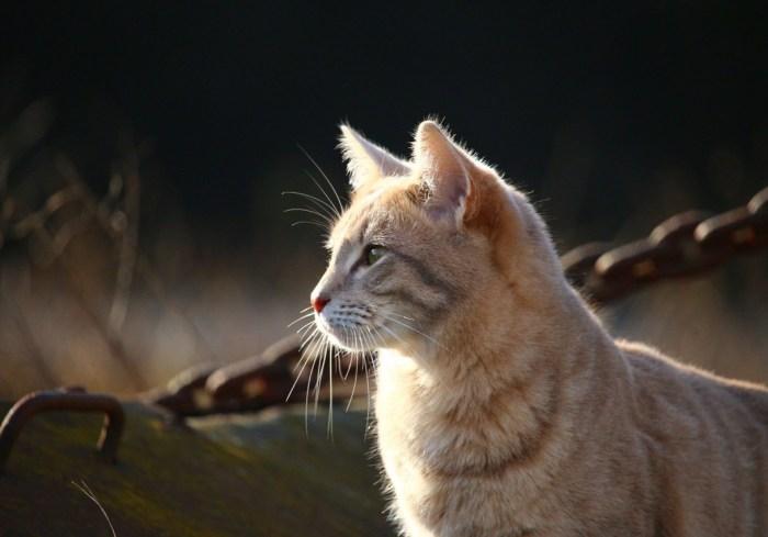 cat-1183086_1280