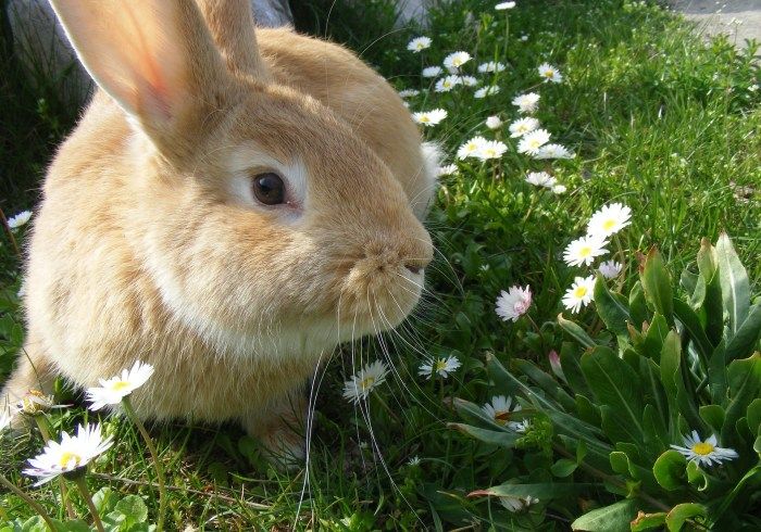 rabbit-344311_1920
