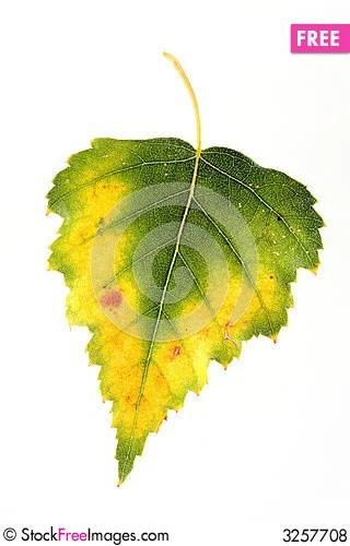 Leaf - 3257708