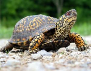 Turtle Trading System Metastock