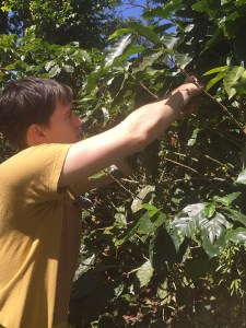 Sustainable Coffee in Nicaragua