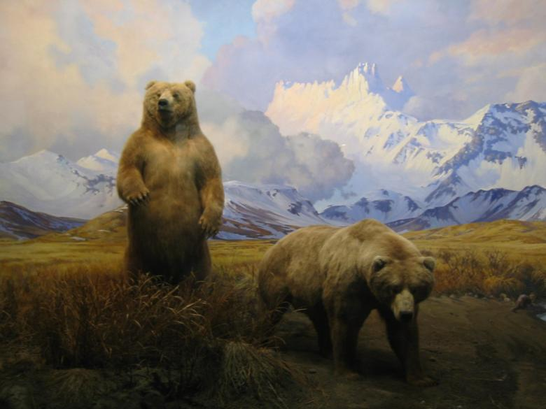 Grizzly Bear Mountain Scene Free Stock Photo By Tim