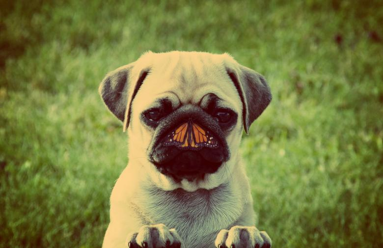 Dog And Butterfly Unlikely Friends Concept Free Stock