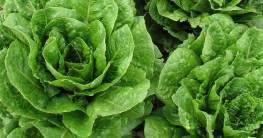 Salat ist ein basisches Lebensmittel