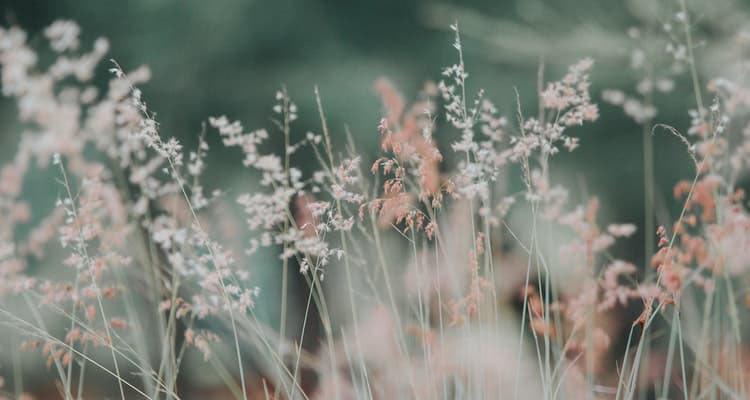 Pollengras