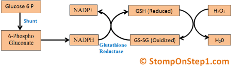 Glutathione Free Radicals