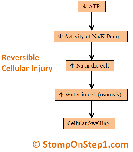 Reversible Cell Injury Cellular Swelling ATP NA Sodium