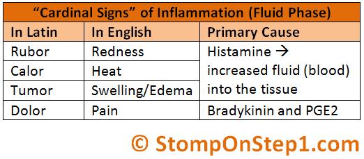 Acute Inflammation (Part 2): Cytokines and Leukocyte