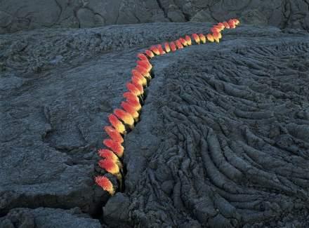 """Nils-Udo, Untitled, crack in lava, """"laternes"""" flowers, 96 x 124 cm, La Réunion, 1998."""