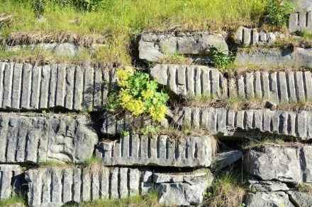 Stützmauern bieten vielfältige Lebensräume für Tiere und Pflanzen.