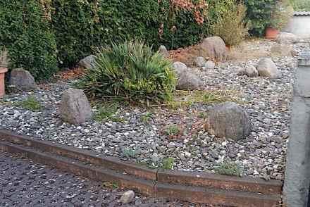 """Einen ungepflegten Schottergarten erobert die Natur alsbald wieder zurück. Foto: Bbirke / <a href=""""https://commons.wikimedia.org/""""target=""""_blank"""">Wikimedia Commons</a>"""