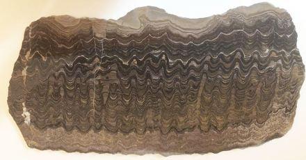 Der polierte Querschnitt eines Stromatolithen zeigt ein solches Sedimentgestein, an deren Bildung Mikroorganismen beteiligt sind. Von außen sind es unscheinbare Knollen, die man meist an Küsten findet. Foto: Erdwissenschaftliche Sammlungen ETH Zürich