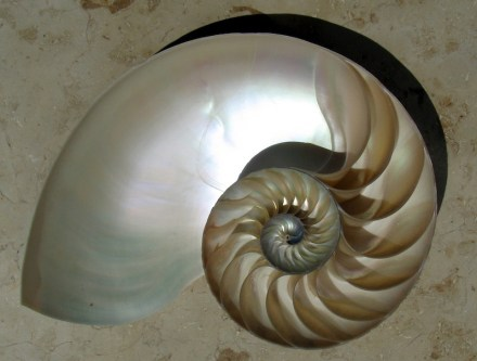 "Nautilus shell cut in half showing the mother-of-peark inside. Photo: Amandajm / <a href=""https://commons.wikimedia.org/""target=""_blank"">Wikimedia Commons</a>"