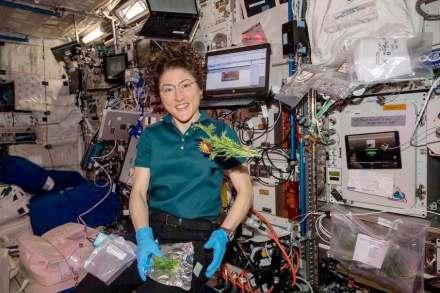 Astronaut Christina Koch collecting and packing mizuna mustard greens. Photo: Nasa/JSC