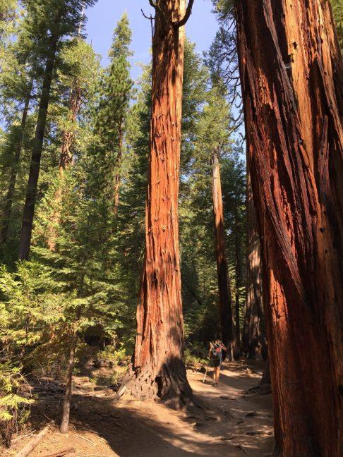 Tree near Cloud's Rest