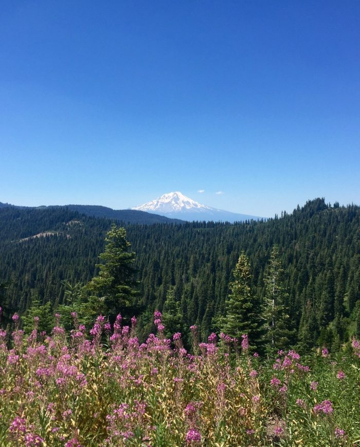 Mount Shasta in the distance