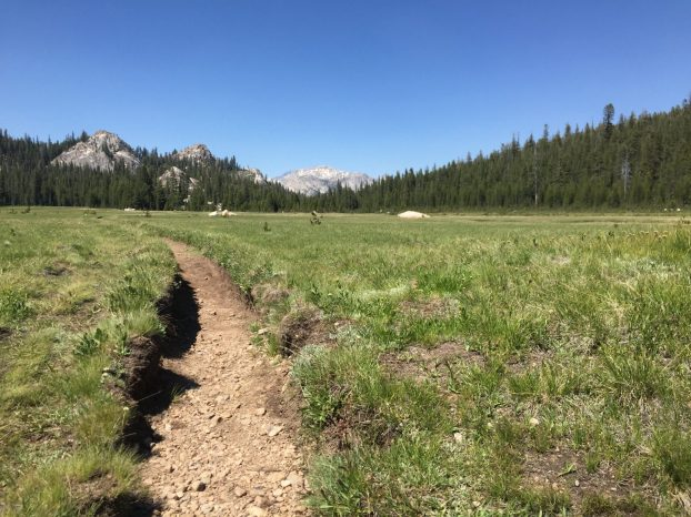 PCT passing through a grassy Sierra meadow