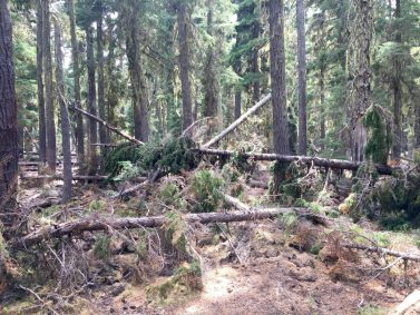 Downed trees completely blocking the PCT