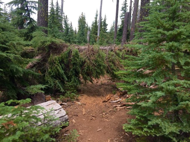 Downed tree laying straight across the trail