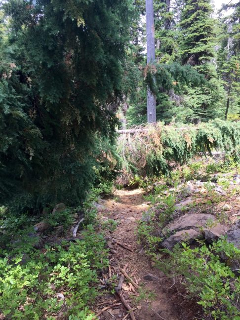 More blowdown obstructing the PCT
