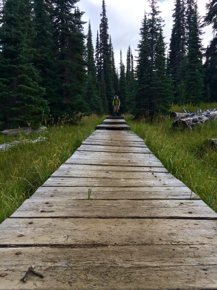 Beardoh approaching a trail boardwalk north of White Pass