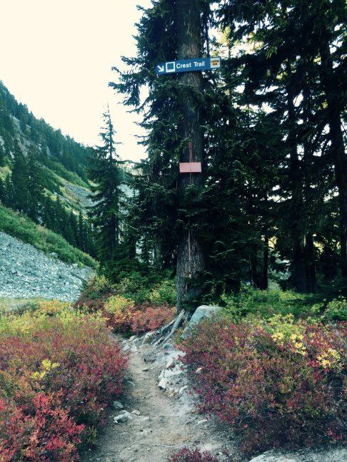 Trail crossing ski slopes at Stevens Pass ski area