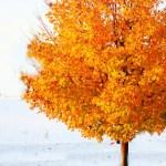SUNDAY SCRIPTURE~ OCTOBER 30, 2011