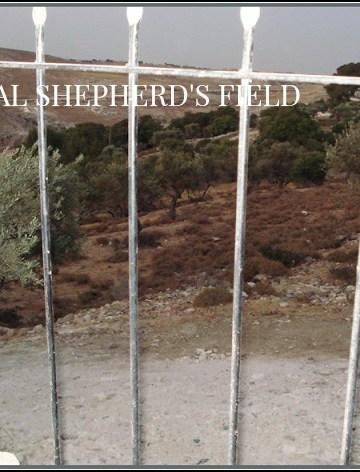 MEET ME IN SHEPHERD'S FIELD