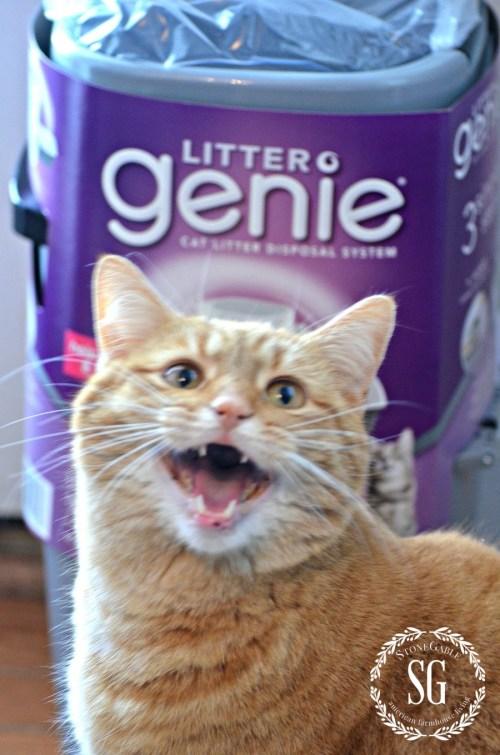 HOBBES-THE STONEGABLE CAT-Litter Genie and Hobbes-stonegableblog.com