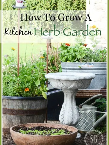 HOW TO GROW A KITCHEN HERB GARDEN