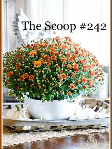 THE SCOOP #242
