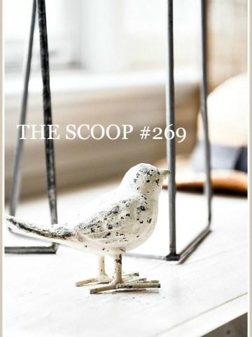 THE SCOOP #269