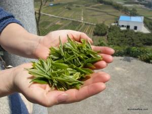 ChinaSpring2015 Fresh Green