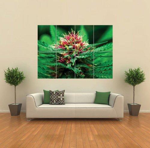 Marijuana Flower Wall Art Poster