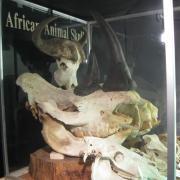 African Animal Skulls 036