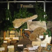 Fossil Display 004