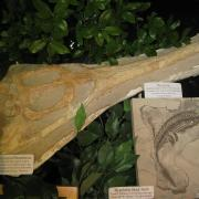 Fossil Display 005