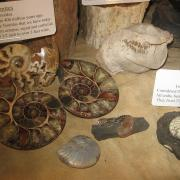 Fossil Display 012