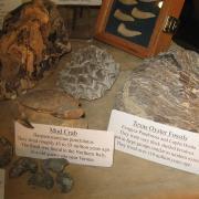 Fossil Display 014