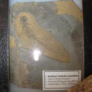 Fossil Display 019