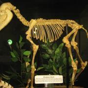 Mammals and Birds 007