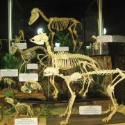 Mammals and Birds 018