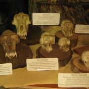 Primates 008