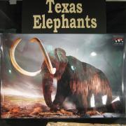 Texas Elephants 061