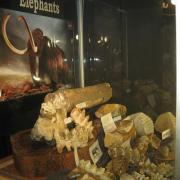 Texas Elephants 072