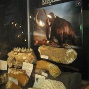 Texas Elephants 073