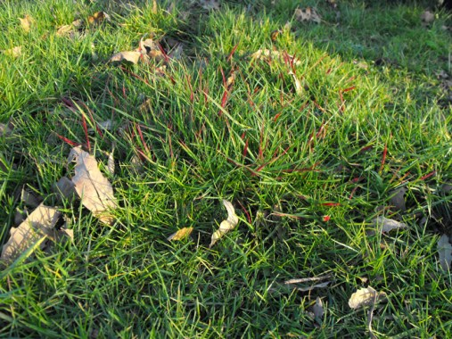 Read Thread – see Small Grass